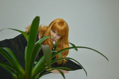 Green flower with sexy red-haired girl Halloween Royalty Free Stock Photos