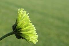Green Flower Stock Photos