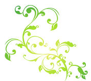 Green flower and vines pattern. Drawing of green flower and vines pattern in a white background Stock Photo