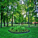 Green Flowerbed city Kiev Royalty Free Stock Image