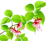 Green flowering branch of tropical tree Stock Photo