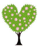 Green flowering tree Stock Image