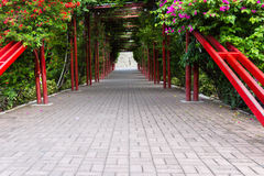 Green flowering tunnel Royalty Free Stock Photo