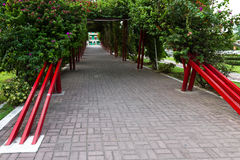Green flowering tunnel. Panama City, Panama- June 08: A green natural tunnel entering the old part of Town, Casco Viejo. June 08 2016, Panama City, Panama Royalty Free Stock Photography