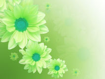 Green flowers. Mother's day card Royalty Free Stock Images