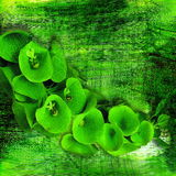 Green flowers Royalty Free Stock Photos