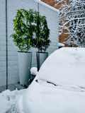 Green flowers in flowerpots, drawing on the wall, car covered with snow. Winter stock photos