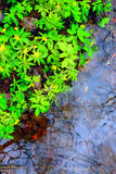 Green flowers leaf near water in puddle Stock Photos