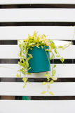 Green flowers pot. Hang on the wall Stock Image