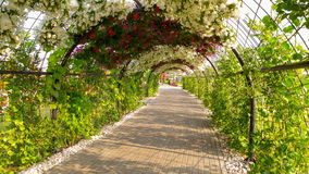 Green flowers road 4k time lapse from dubai magic garden stock footage