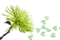 Green flowers and shamrocks. Green flower and shamrocks ornaments on isolated background stock images