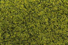 Green fluffy carpet floor texture stock photography