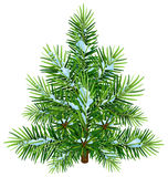 Green fluffy Christmas pine tree in snow Royalty Free Stock Photo
