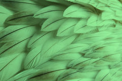 Green fluffy feather closeup Stock Photography