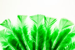 Green fluffy feathers shaped like a fan Royalty Free Stock Photos
