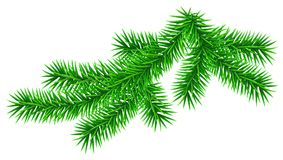 Green fluffy fir pine twig isolated on white. Vector illustration Stock Photography