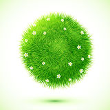 Green fluffy grass ball with chamomiles Stock Photos