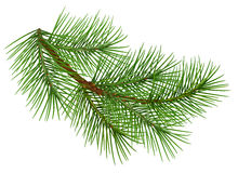 Green fluffy pine branch symbol of christmas.  on white background Stock Photos