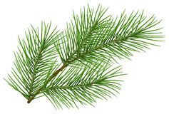 Green fluffy pine branch symbol of new year. Isolated on white background. Illustration in vector format Royalty Free Stock Image