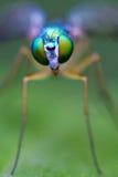 Green fly eyes Stock Photo