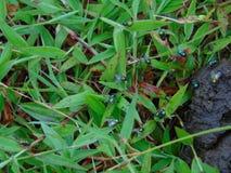 Green fly. Wildlife green fly Stock Photo