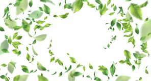 Green Flying Leaves. Abstract foliage background over white background stock illustration