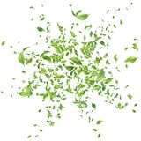 Green Flying Leaves. Green flying or falling off leaves. Vector abstract foliage background stock illustration