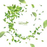 Green Flying Leaves. Green flying or falling off leaves. Vector abstract foliage background royalty free illustration