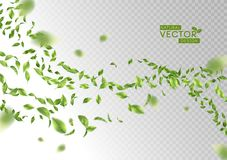 Green Flying Leaves. Green flying or falling off leaves. Vector abstract foliage background Stock Photo