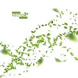 Green Flying Leaves. Green flying or falling off leaves. Vector abstract foliage background Royalty Free Stock Photo