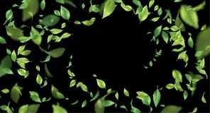 Green Flying Leaves. Abstract foliage background over black background stock illustration
