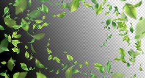 Green Flying Leaves. Vector abstract foliage background Royalty Free Stock Photos