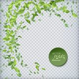Green Flying Leaves. Vector abstract foliage background. Green flying Leaves Stock Photos