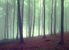 Green fog in a beautiful forest royalty free stock photo
