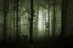 Green fog in natural forest. Green fog in dark natural forest Royalty Free Stock Photo