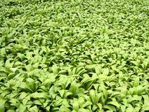 Green foliage. Background stock photo