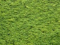 Green foliage Stock Image