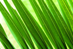 Green foliage. Long strips of green foliage Royalty Free Stock Photos