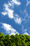 Green foliage against the sky. Green foliage of trees against the dark blue sky with clouds in the bright sunny day stock images