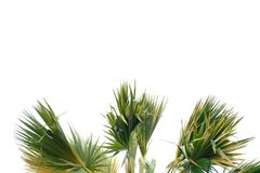 Tropical palm tree leaves with branches on white isolated background stock photo