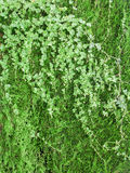 Green foliage background Stock Photo