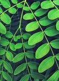 Green foliage Stock Photos