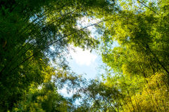 Green foliage and big tree branch with blue sky in forest Stock Images