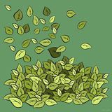 Green Foliage blown. Foliage flying in the wind with the green background depict the wind blowing Stock Images