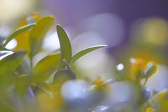 Green foliage close-up, with blurred background. macro photo. Green foliage close-up, with blurred background stock image