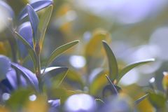 Green foliage close-up, with blurred background. macro photo. Green foliage close-up, with blurred background royalty free stock photos