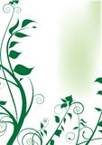 Green foliage design Stock Photography