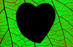 Green foliage draw heart shaped Royalty Free Stock Photos