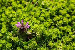 Green foliage and flowers on a sunny day in spring or summer royalty free stock image