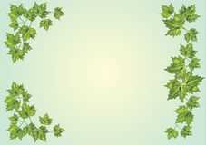 Green foliage frame on light background Stock Photos
